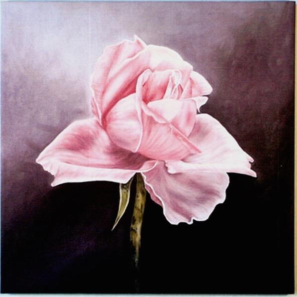 Pink Rose